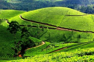 Munnar Tea Gardens in Kerala