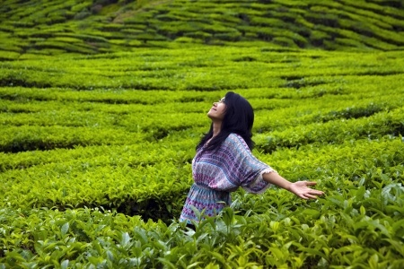 Travel for Tea – Tea tourism in Asia